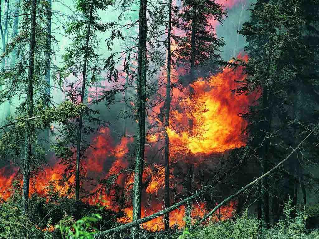 Число жертв лесных пожаров в Португалии возросло до 63 человек