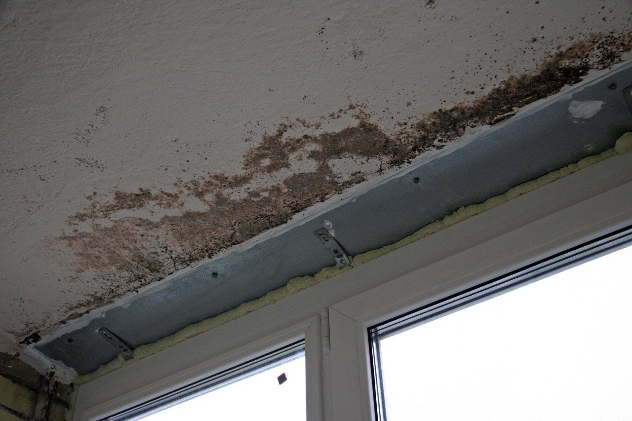 Как бороться с плесенью на стенах в домашних условиях народн.