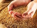 صور: اعتزام كازاخستان علـــى تصدير نحو 3 ملايين طن مـن الحبوب إلى الصين / أخبار الاعمال و الاقتصاد