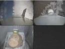 صور: عودة قرد إيراني من رحلة إلى الفضاء سالماً معافى / مجتمع