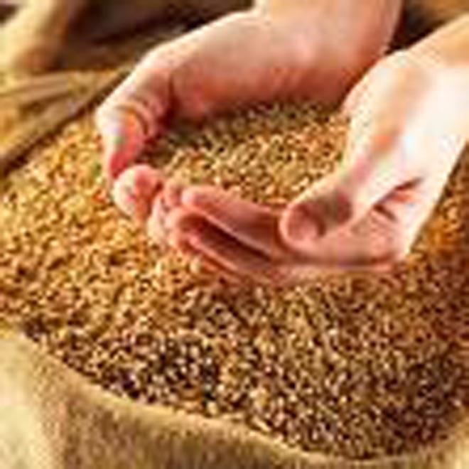 Azerbaijan's Western Regions May Face Bread Deficit