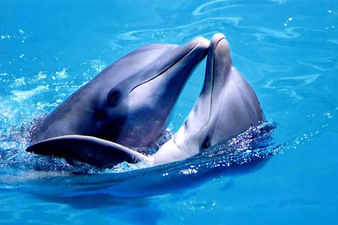 Занятся сексом с дельфином