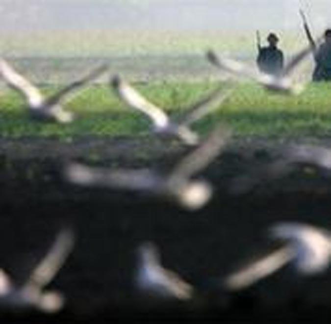 В Азербайджане запрещено использование охотничьего пистолета