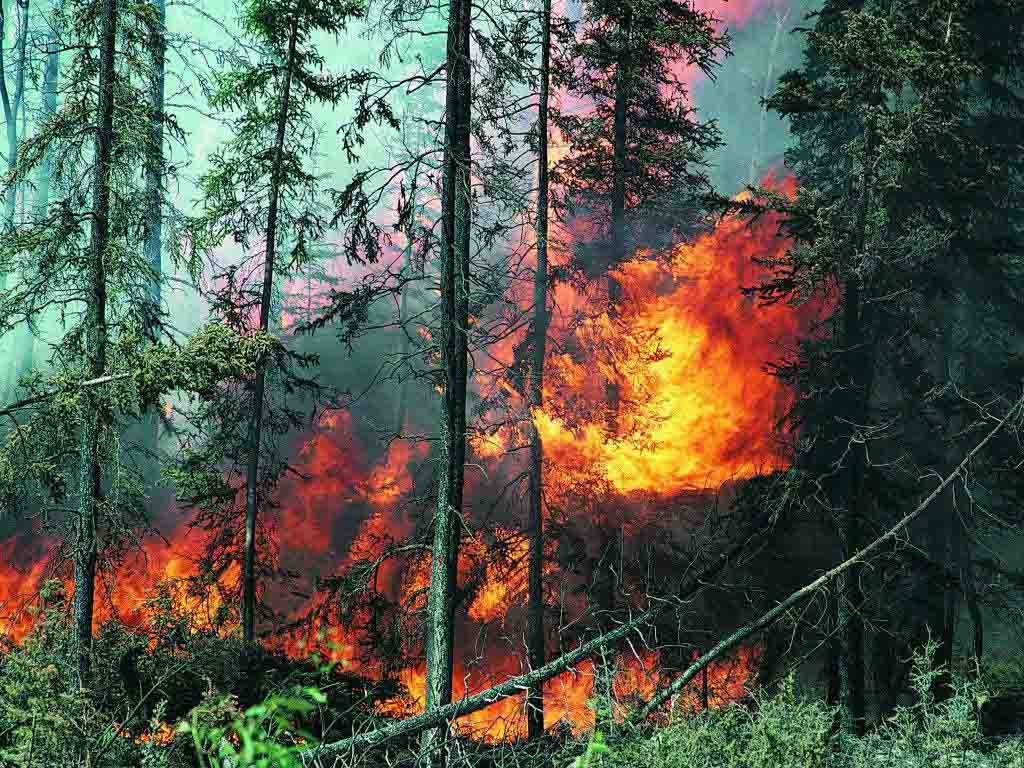 Public Barred from Whittier Fire Area