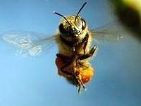 Naməlum şəxslər 200 min arını öldürdü