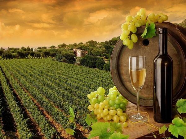 В стране предлагается проводить выставки вина