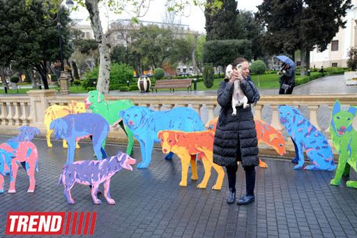 """""""YARAT!"""" rusiyalı dizayner və rəssam Nataliya Pastuxovanın """"Yaxşı it"""" layihəsini təqdim edib (FOTO)"""