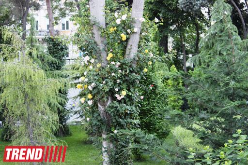 Филармонический сад Баку (фотосессия)