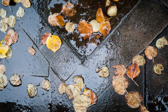 Paytaxtda yağış, bölgələrdə qar yağacaq