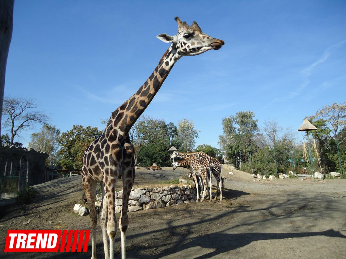 Путешествие по одному из старейших зоопарков Европы (ФОТО)