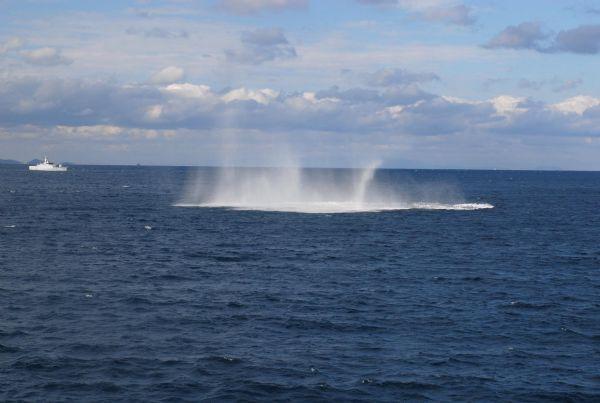Azerbaijan taking part in NATO naval exercises (PHOTO)