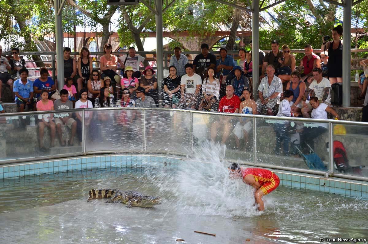 В гостях у Таиланда: Невероятное шоу с крокодилами  в Паттайе (ФОТО)