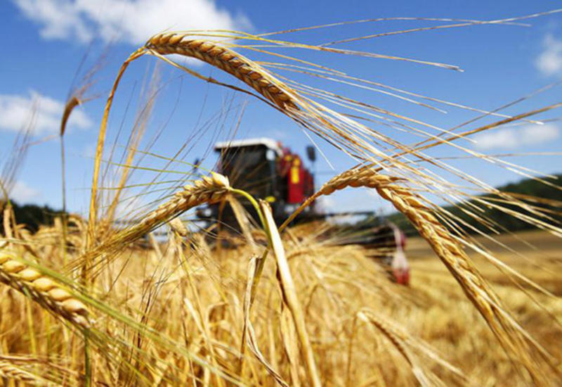 Azerbaijan launches second stage of employment project in agriculture