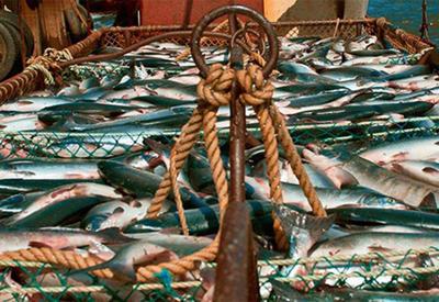 В Азербайджане импорт ряда сортов живой рыбы освобождается от таможенных пошлин
