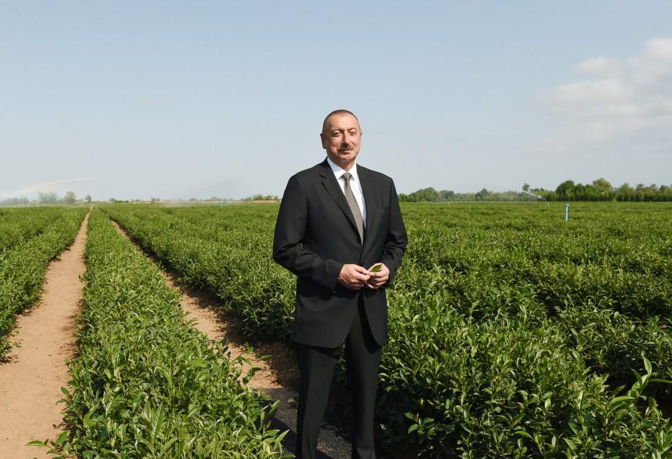 "President Ilham Aliyev views ""Yashil Chay"" plantation in Lankaran (PHOTO)"
