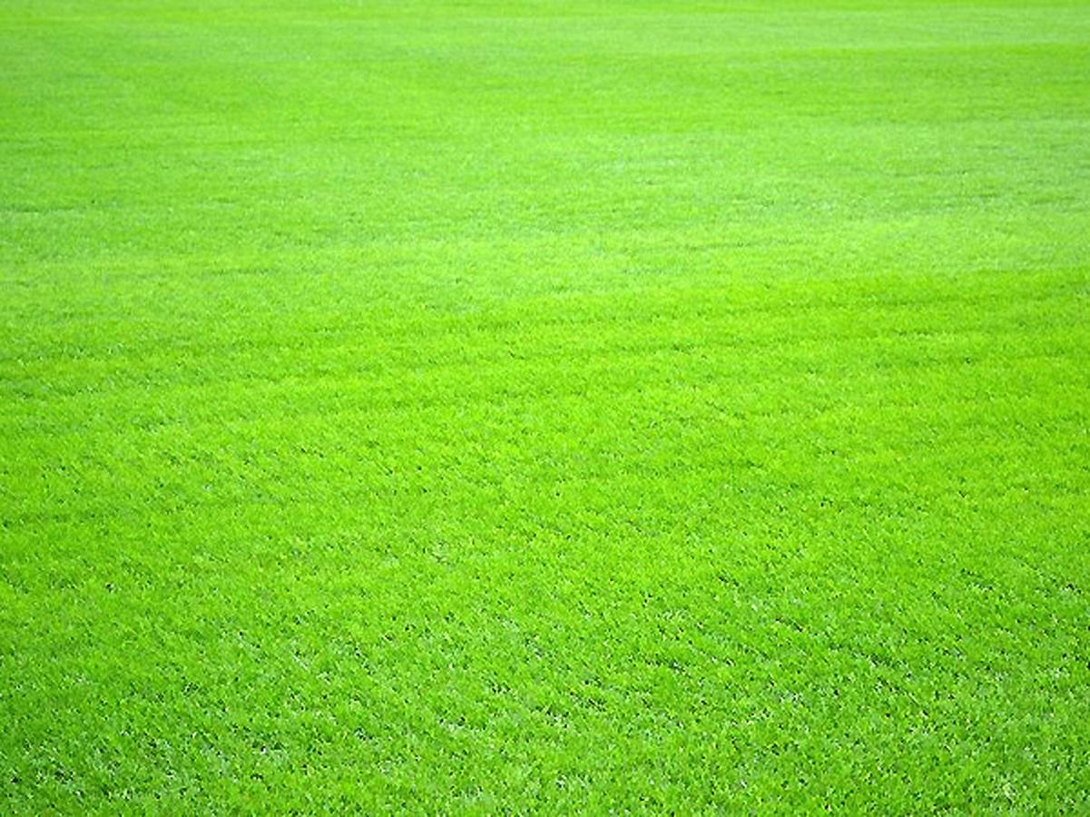 Gəncə şəhər stadionunun son durumu - FOTO