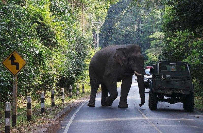 Hindistanda filin hücumu nəticəsində 5 nəfər ölüb