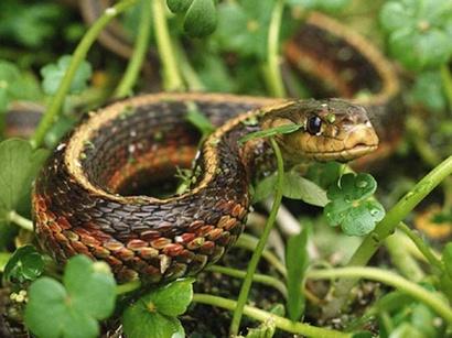 Институт зоологии Азербайджана прокомментировал информацию о появлении змей на бульваре