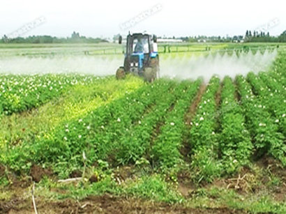 Land plots allocated for long-term lease in Turkmenistan's agricultural sector